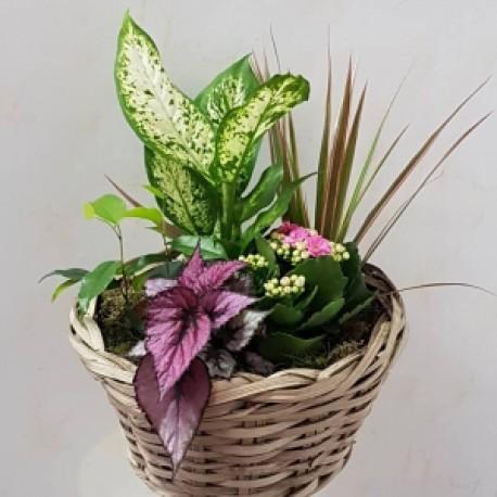Mixed house plants
