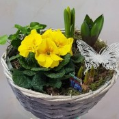 Planted basket